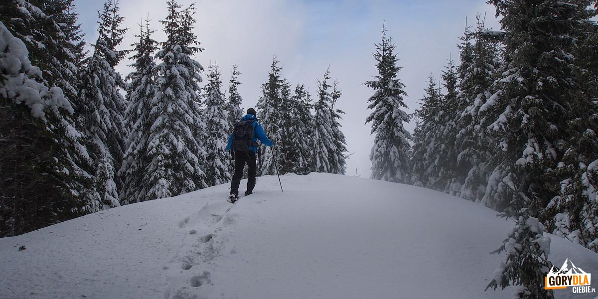 Podejście na szczyt Kukuł (1534 m)