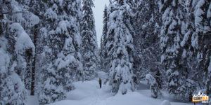 Leśna ścieżka łagodnie schodzi w dół, do jeziorka Mariczejka