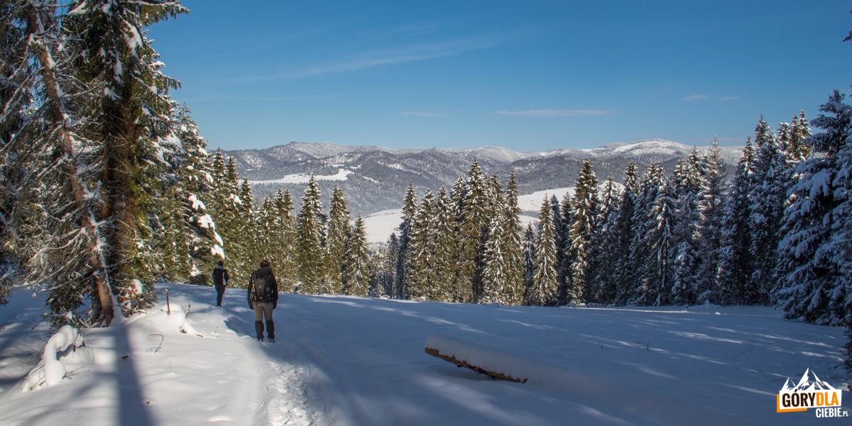 Przejście od górnej stacji Areny Narciarskiej Jaworki w stronę Rezerwatu Wysokie Skałki