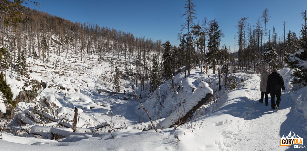 Zimowa Dolina Zimnej Wody