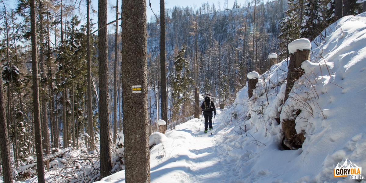 Na trasie żółtego szlaku przy Wodospadach Zimnej Wody