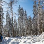 Zimowy las na Lubogoszczy