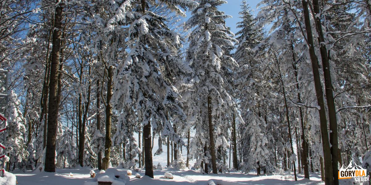Zimowy las naLubogoszczy