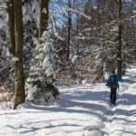 Przejście przez grań Lubogoszczy szlakiem czerwonym, w lewo skręca zileony szlak do Mszany Dolnej