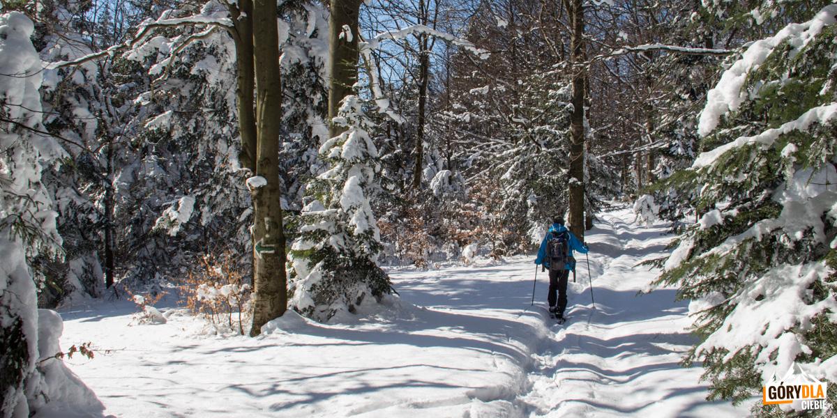 Przejście przez grań Lubogoszczy szlakiem czerwonym, wlewo skręca zileony szlak doMszany Dolnej