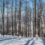Lubogoszcz zimą