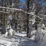 Na grani Lubogoszczy (czerwony szlak)