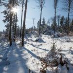 Zima na Lubogoszczy