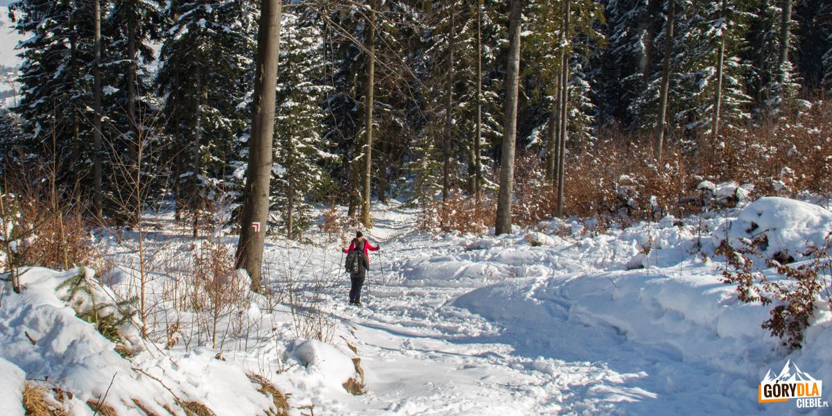 Miejsce, w którym czerwony szlka łączy się z drogą, którą wchodziliśmy na szczyt Lubogoszczy