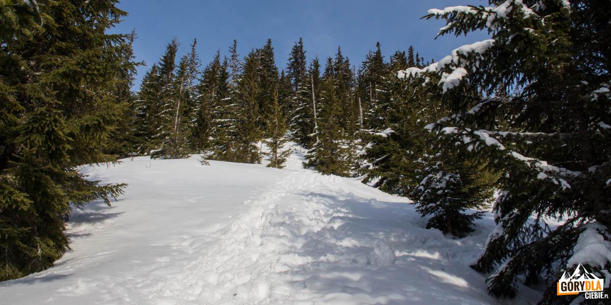 Zejście zielonym szlakiem do Magurki
