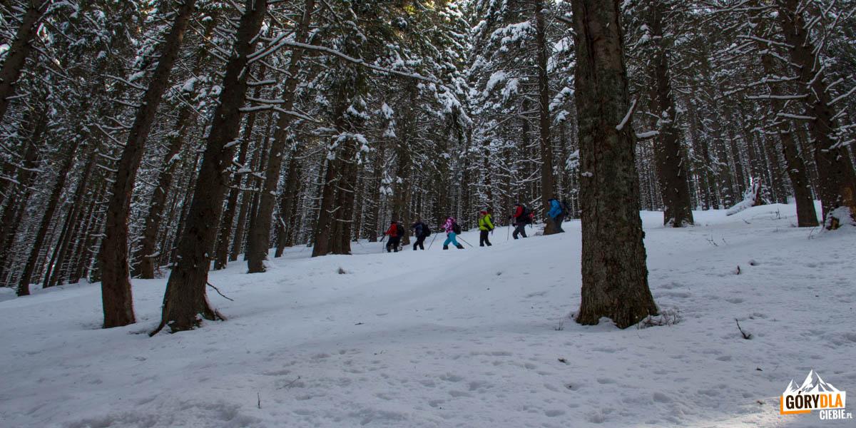 Podejście stromą, leśną ścieżka (żółty szlak) na grań