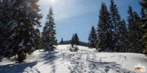Polanka skąpana w słońcu (żółty szlak)