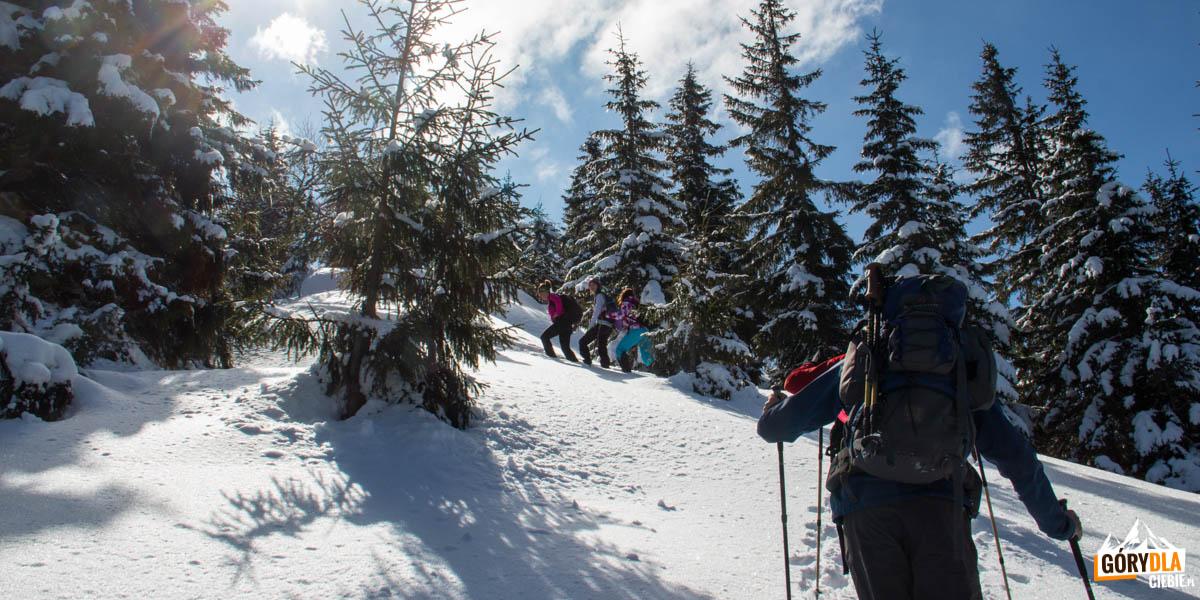 Podejście żółtym szlakiem w kierunku przełęczy sedlo Zámostskej hole,