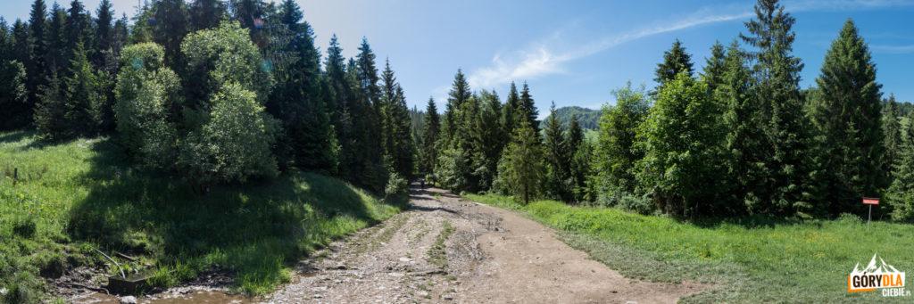 Droga na Wysoką (zielony szlak)