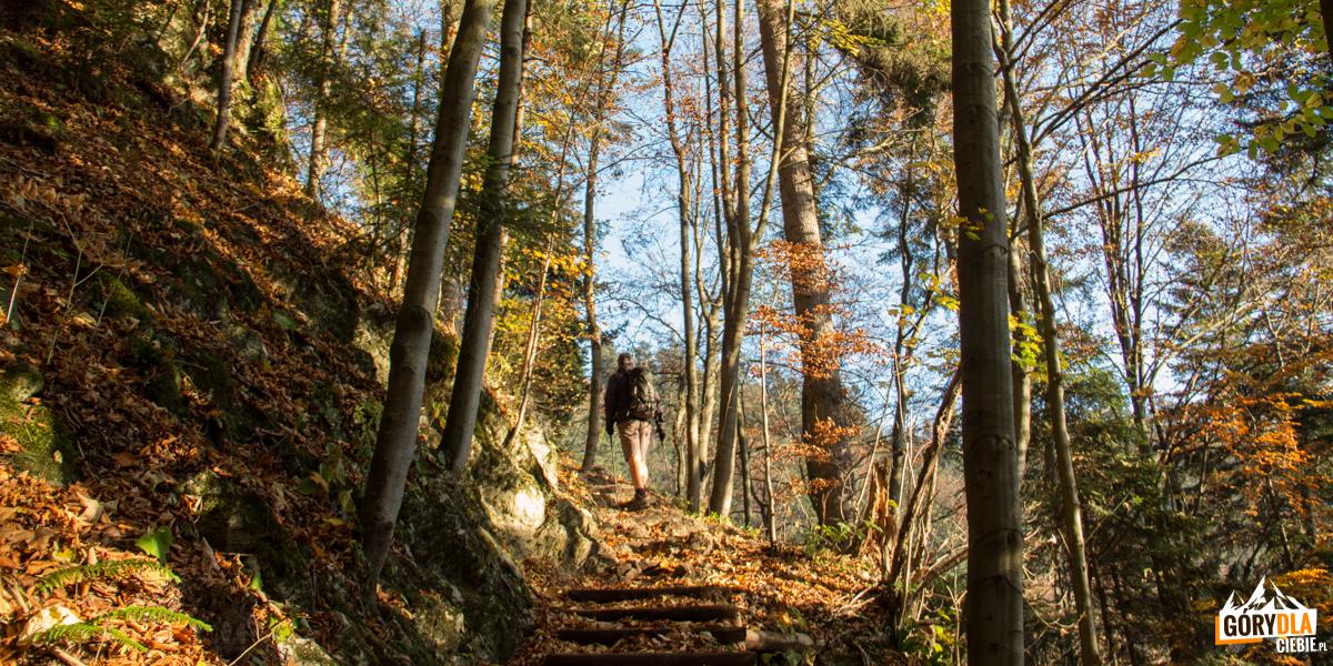 Trasa zielonego szlaku naTrzy Korony