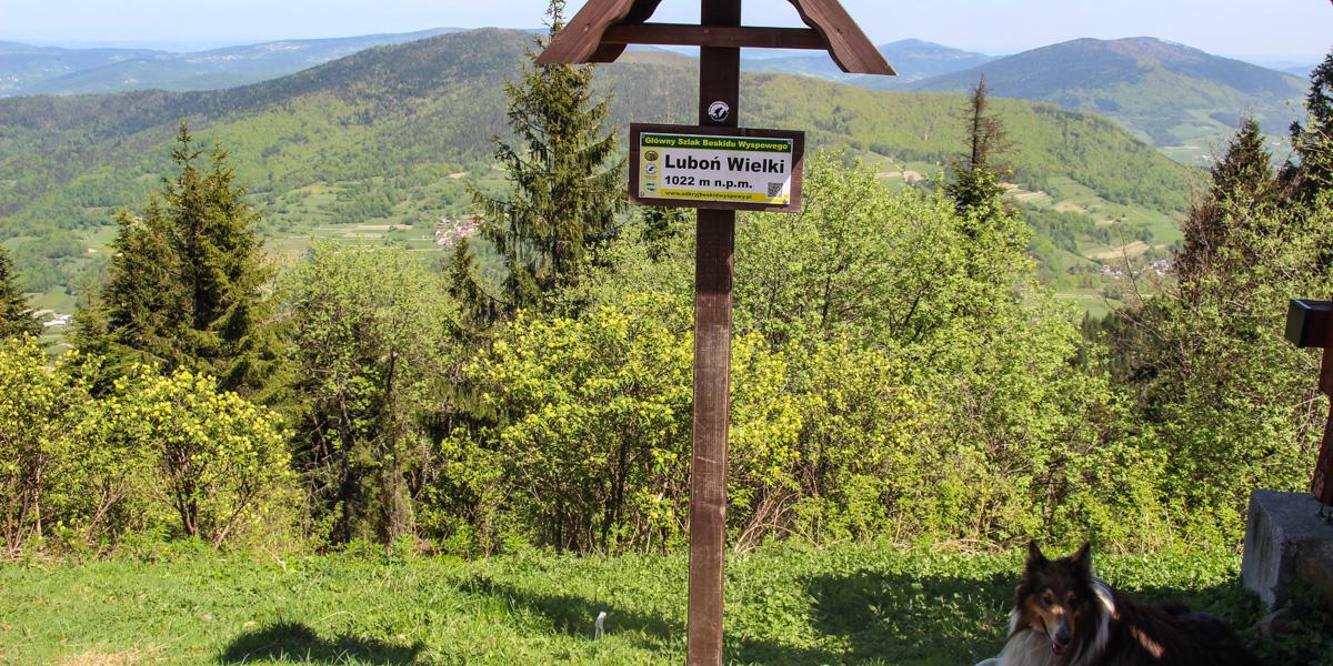 Na szczycie Lubonia Wielkiego,Na szlaku VII Touru Mszana Dolna, zdj. Tomek Kubik