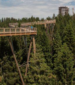 Ścieżka wkoronach drzew wDolinie Bachledowej