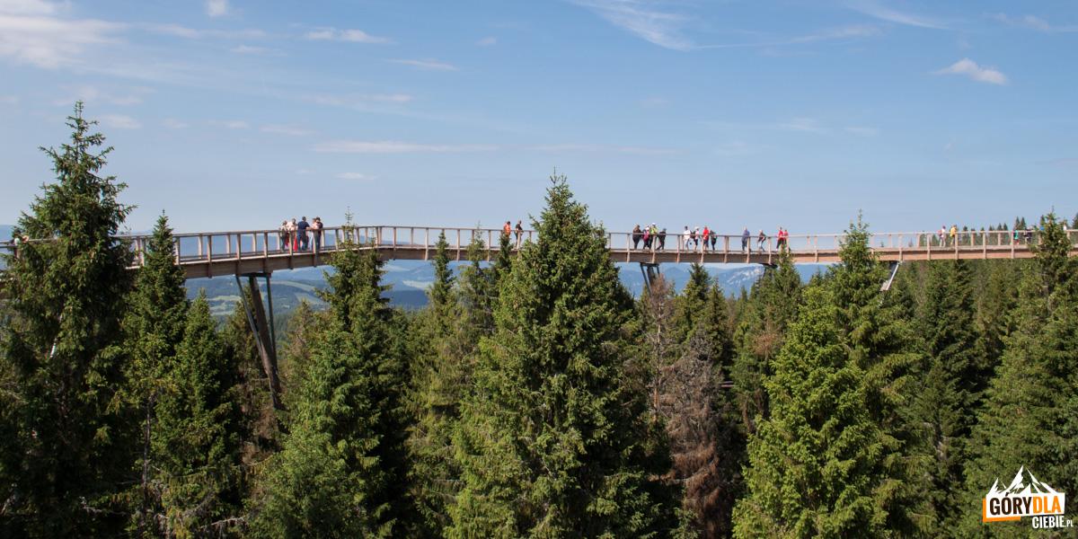 Ścieżka w koronach drzew widziana z wieży widokowej
