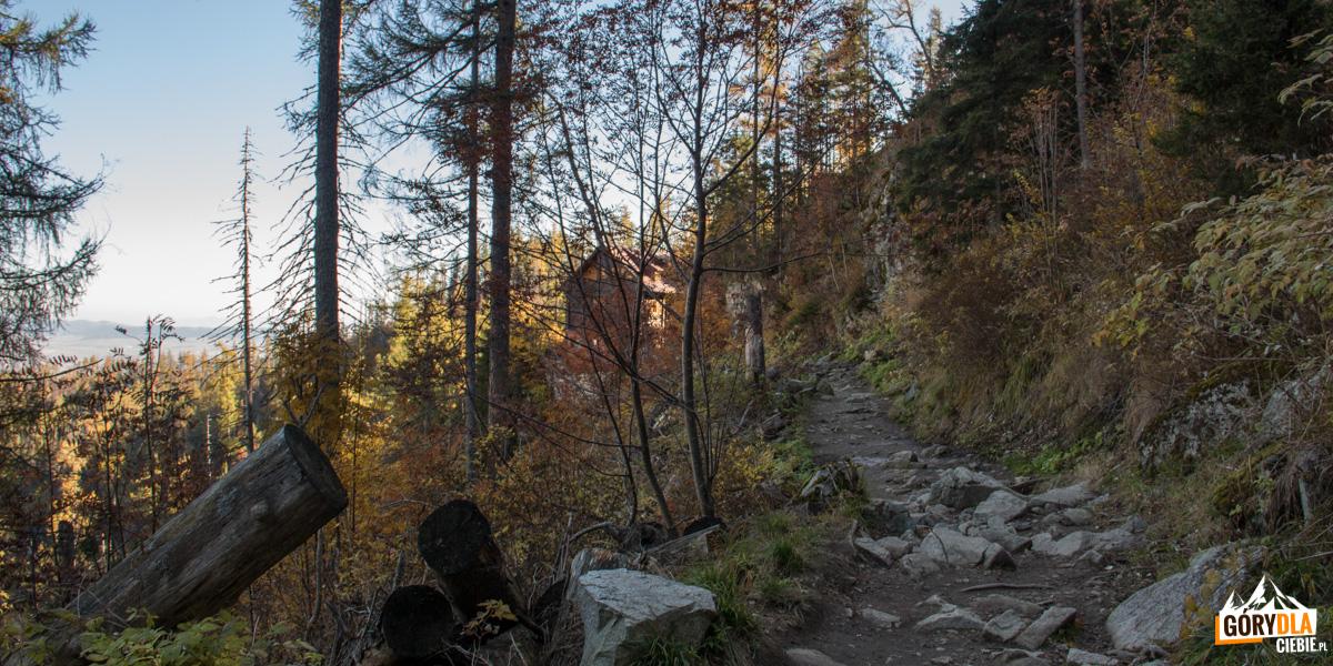 Na szlaku odWodospadów Zimnej Wody naHrebienok, wlesie widoczne schronisko Bilikova chata
