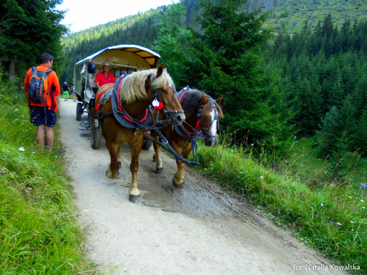 Konie na trasie Wielkie Borowe - Roztoka, zdj. Natalia Kowalska