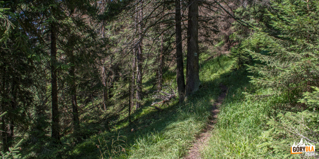 Zielony szlak łagodnym trawersem przez las doprowadza nas do polany Drapáč