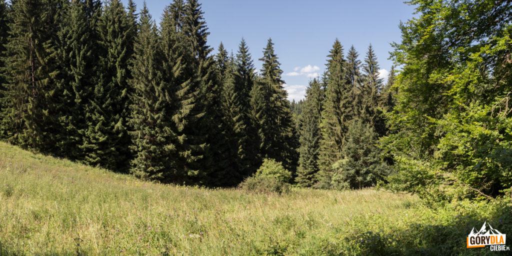 Polana Zasadce (745 m)