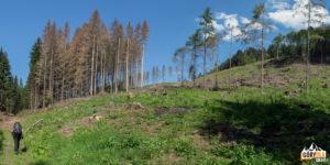 Na trasie zielonego szlaku Wielki Chocz - Górny Kubin