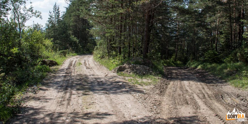 Na rozwidleniu dróg skręcamy w lewo (tuż przed linią wysokiego napięcia)