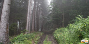 Początej czerwonego szlaku ze wsi Jasenová biegnie drogą przez świerkowy las