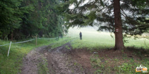 Polana latem jest wypasana, musimy obejść ją brzegiem lasu