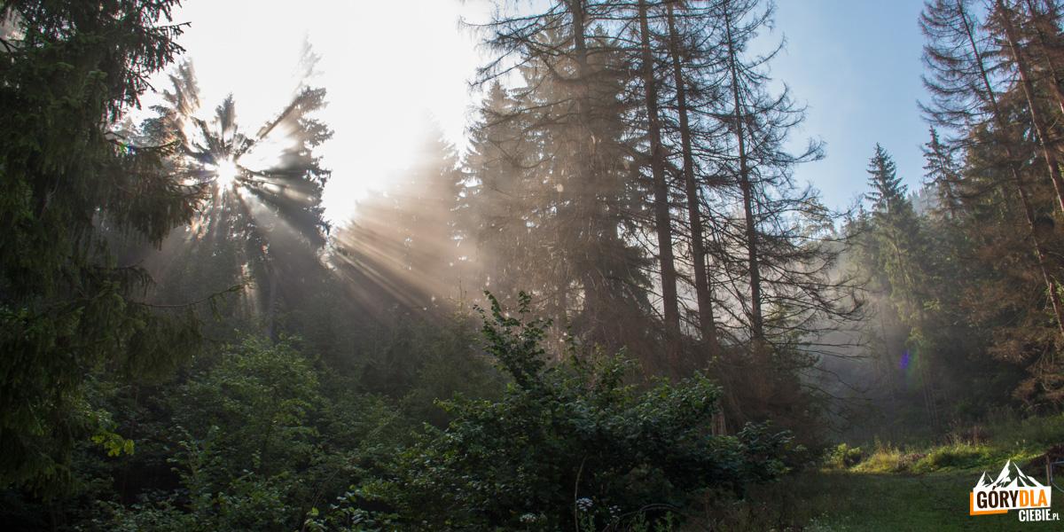 Wschód słońca na leśnej polanie