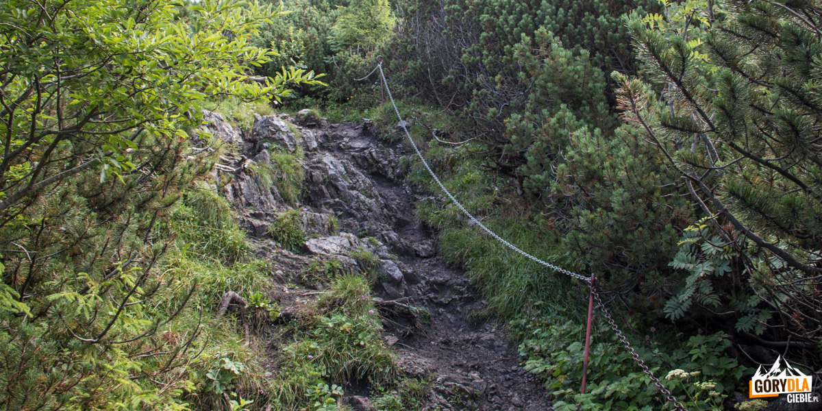 Czerwony szlak z Jasieniowej (Jasenová) - odcinek ubezpieczony łańcuchami