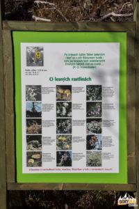 Tablice ścieżki dydaktycznej przy czerwonym szlaku do Popradzkiego Stawu