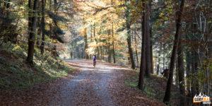 Droga Pienińska jest wspaniałym miejscem na wycieczki rowerowe, także dla najmłodszych
