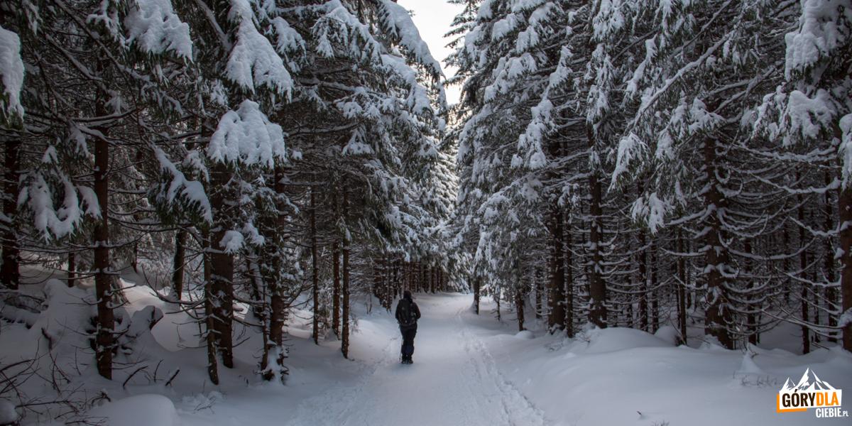 Leśna ścieżka przy zboczach Kalackiej Turni