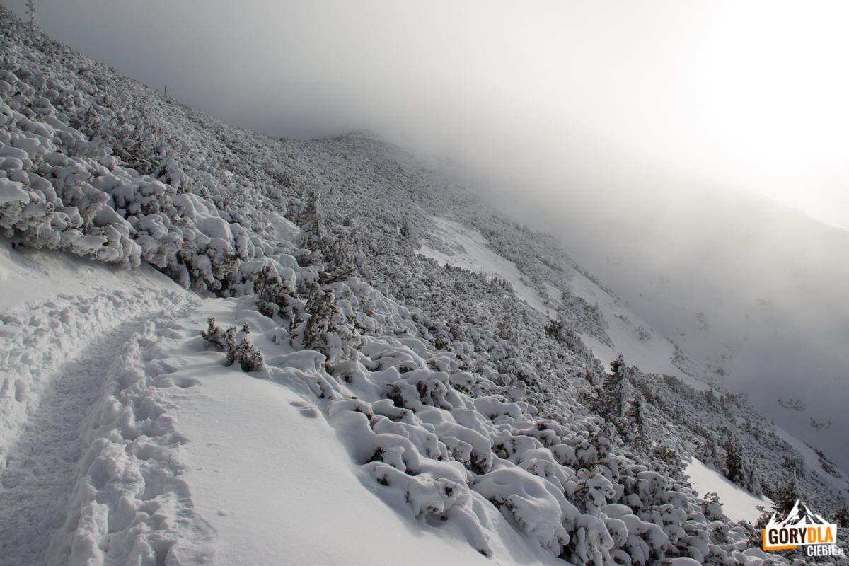 Żółty szlak pod Przełęczą Kondracką prowadzący do Doliny Małej Łąki