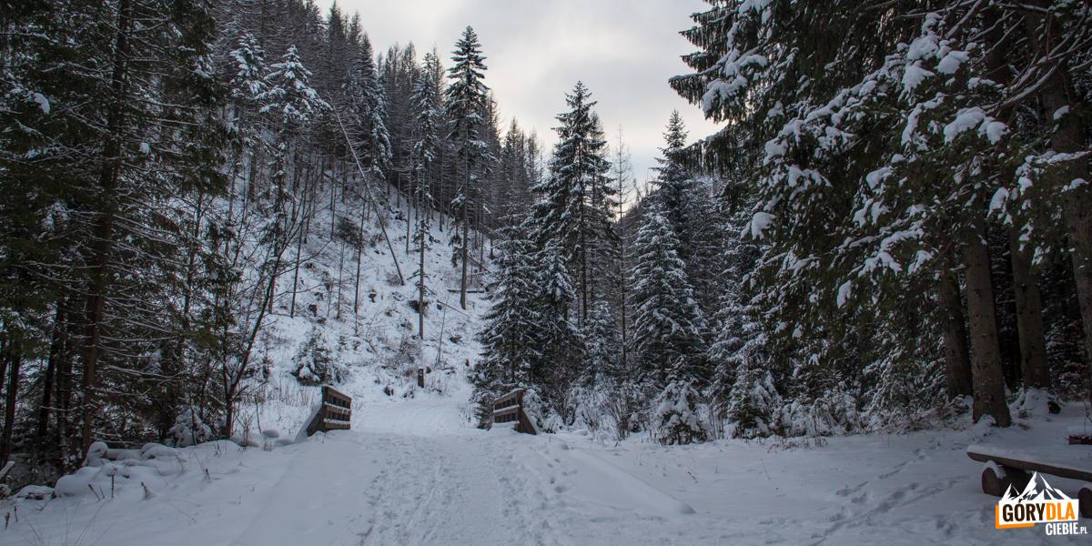 Dolna część Doliny Małej Łąki