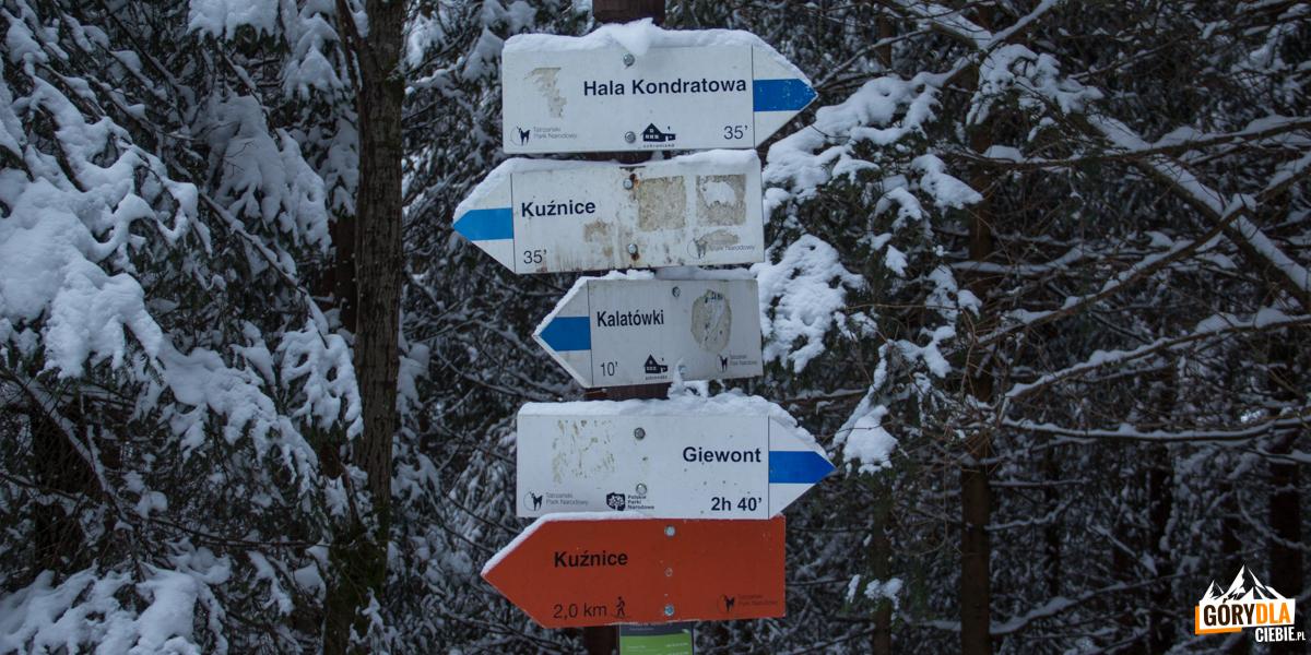 Drogowskazy szlaków na skraju Polany Kalatówki