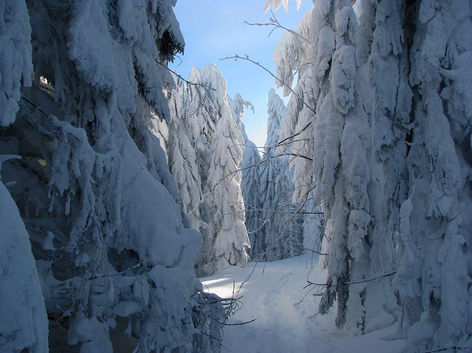 Zima na Turbaczu, zdj. Kamil Sułkowski