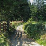 Zielony szlak na Eliaszówkę