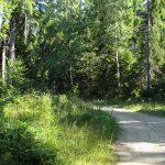 Droga zielonego szlaku na Eliaszówkę biegnie granicą polsko - słowacką