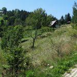 Osiedla na drodze zejścia niebieskim szlakiem z Eliaszówki do Kosarzysk