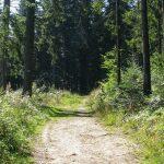 Droga zielonego szlaku na Eliaszówkę