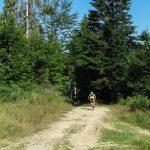 Droga zielonego szlaku na Eliaszówkę jest również szlakiem rowerowym