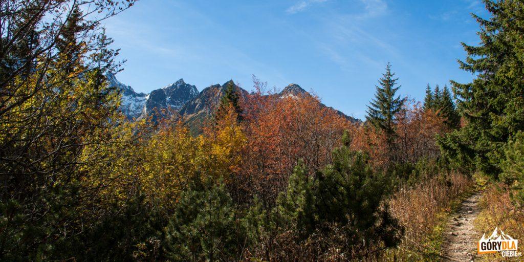 Sciezka zielonego szlaku powyżej Rakuskiej Polany
