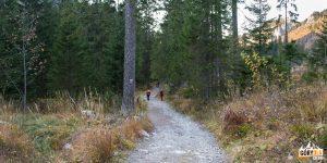 Scieżka niebieskiego szlaku powyżej Gałajdówki (lub Polana pod Muraniem)