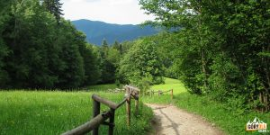 Zejście z Przełęczy Szopka w kierunku Pienińskiego Potoku