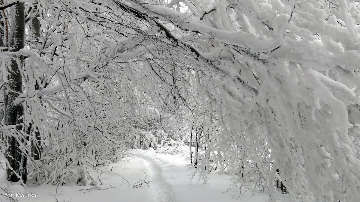 Wycieczka na Górę Miejską nad Limanową, fot. Maurka