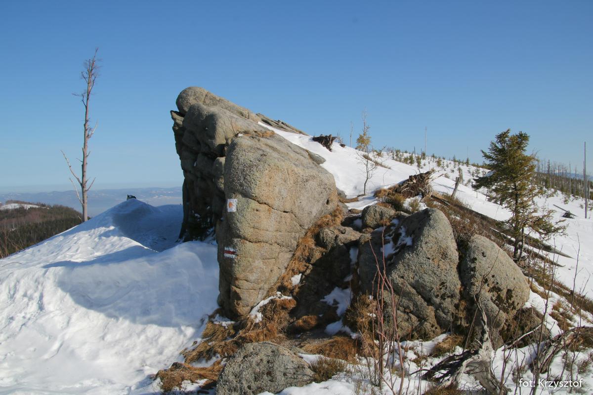 Wychodnie piaskowców na Magurce Radziechowskiej (1108 m)