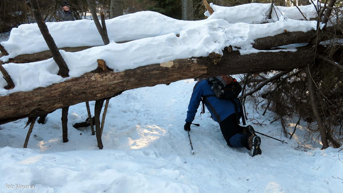 Mogielica zimą z Jurkowa, zdj. Maurka